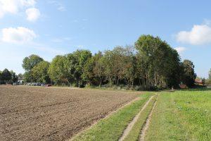 Das zur Bebauung vorgesehene Grundstück im Außenbereich ragt in den regionalen Grünzug | Foto: Detlev Sträter